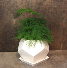 Geo Planter, Small, White by MGMY Studio - I love the use of geometry in plant holders. Something about those rigid, faceted surfaces paired with the organic shapes of the plant get me every time. White Planters, Large Planters, Planter Pots, Wall Planters, Fresco, Terrarium Jar, Organic Shapes, Large White, Indoor Plants