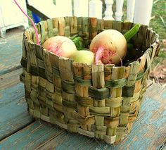 Cattail basket.  The leaves are dried on nets in the shade for a couple of weeks before use.