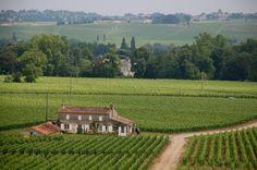 Beautiful Vineyard.