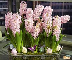 Até os seus arranjos de flores podem entrar na tendência das cores do ano! Olha só que lindas estas em um tom de rosa pastel!