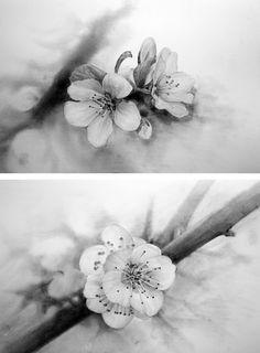 꽃,연필화,소묘그리