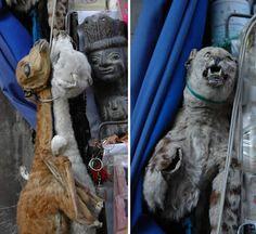 Засушенные детёныши лам и кошки