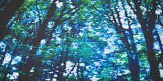 Alex Dimercurio   Saatchi Art Wonderful Time, Saatchi Art, Original Paintings, Around The Worlds, In This Moment, Artist, Plants, Artists, Plant