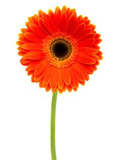 """Gerbera DaisiesDaisies are known for symbolizing beauty, innocence and purity, says Law. The Gerbera variety, recognizable by their large flowering heads, is available in an assortment of peppy hues, which gives them the additional meaning of cheerfulness. The happy buds are """"always a favorite to receive,"""" she says.  Read more: Flower Meanings - Flower Symbolism -  @Woman's Day"""