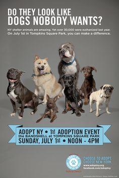 Image Result For Pet Adoption Psa Pretty Animals Pet Adoption Animal Companions