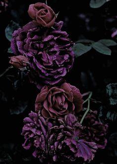 Gothic fleurs.