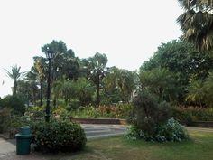 Wow!! Intramuros, Plants, Plant, Planets