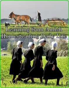 Learning from Amish Homesteading Daily Life Homesteading - The Homestead Survival .Com