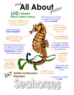 """My All About Sea Horses (Seahorses) Book - Ocean Animal Unit Study from Courtney McKerley on TeachersNotebook.com -  (9 pages)  - This """"All About Book"""" will be a fun addition to your classroom and lesson on sea horses. This packet can be used along with books specific to the animal or it can be used on its own. Other animals you will see in the ocean animal series include the sea tu"""