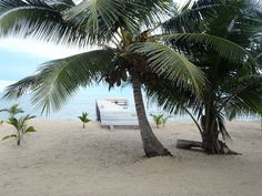 The Front Yard At Sabal Beach