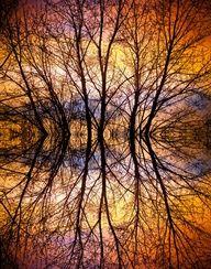 Tree reflection autumn
