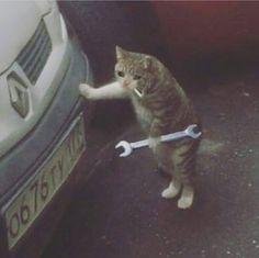 Make sum wholesome memes already Sad Cat Meme, Cute Cat Memes, Funny Memes, Dankest Memes, Funny Comedy, Animal Memes, Funny Animals, Cute Animals, Cat Crying
