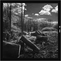 Deforestation | April 2016 - [Minolta Autocord 1962 - Rokkor 75mm f3.5 - Rollei Infrared IR400 ei400- XTOL 1:1 20ºc 7.5mins]. First test roll using Hoya R72 filter with five stops exposure compensation.