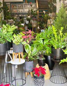 58 Best Indoor Plants To Purify The Air In Your Home,types of indoor plants,small indoor plants,best indoor plants Small Indoor Plants, Outdoor Furniture Sets, Outdoor Decor, Hanging Plants, Planters, Home Decor, Plants, Interior Design, Home Interior Design