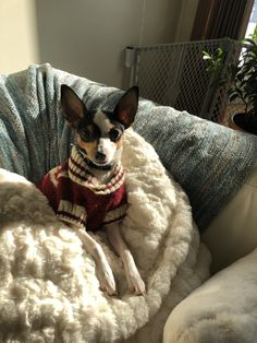 I'm ready Toy Fox Terriers, Rats, Boston Terrier, Pup, Animals, Animais, Animales, Dog Baby, Animaux