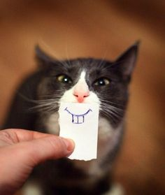 cat in need of braces   hahahaha>>funny! I wanna do a bunch of different teeth for my cats.