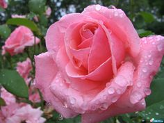 imagenes  | Imagenes de flores
