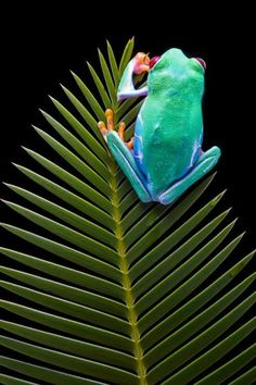 April is National Frog Month  Celebrate at Busch Gardens!  2dd7b58c2d9b