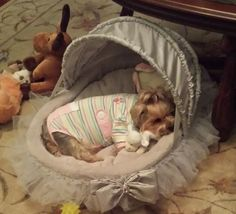 Just too cute not to share :) This #yorkie pic is from @agneserdei on Instagram. I would love to find out who makes this bed...found it! This links to a site where this bed is avail.
