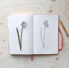 Making my own collection book with pretty flowers, drying & drawing... #flower #driekantiglook #bloemen #bloemendrogen #dryingflowers #drawing #botanical #natuur #nature #sketchbook #ink #moleskine #anjamulder #groningen