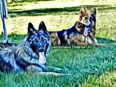 Dreya & Samson's picture as a painting. LOVE!