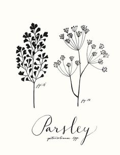 Parsley by Eva Juliet