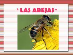 Presentación en slideshare sobre las abejas, con información sencilla para los niños. De Myriam Díaz Morales