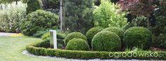 Ogród Dominiki - strona 185 - Forum ogrodnicze - Ogrodowisko