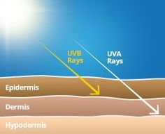 As you can see from this picture UVB rays only reach the first layer of your skin called the Epidermis. Unlike UVA rays which reach the second layer of the skin called the Dermis. This picture was found from: http://www.bananaboat.com.au/sun-facts/what-are-uv-rays/