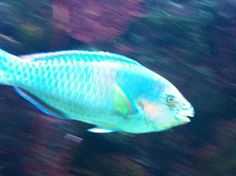 Beautiful fish <3:)