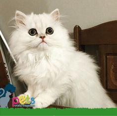 Buenos días ☀️   #PetsWorldMagazine #RevistaDeMascotas #Panama #Mascotas #MascotasPanama #MascotasPty #PetsMagazine #Gatos #GatosPty #GatosPanama #MascotasPty #MascotasAdorables #SuperTiernos #PicOfTheDay #Cats #CatLover #CatOfTheDay #Cute