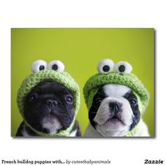 French Bulldog and Boston Terrier wearing frog hats - too cute! French Bulldog and Boston Terrier wearing frog hats - too cute! Baby Animals, Funny Animals, Cute Animals, Animal Fun, Animal Ears, I Love Dogs, Cute Dogs, Awesome Dogs, Crochet Frog