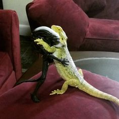 My beardie made a new friend today Funny Lizards, Cute Reptiles, Reptiles And Amphibians, Bearded Dragon Habitat, Bearded Dragon Cute, Baby Animals, Funny Animals, Cute Animals, Funny Pets