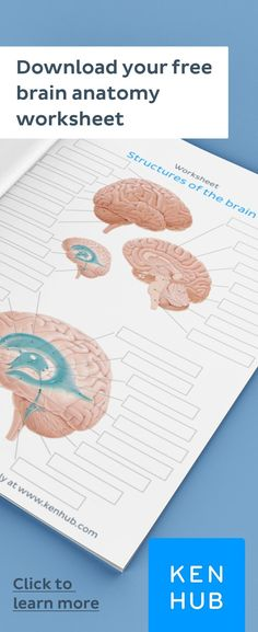 Struggling to learn the of the Start improving your knowledge right away with our handy worksheets. Brain Anatomy, Human Body Anatomy, Human Anatomy And Physiology, Anatomy Organs, Heart Anatomy, How To Study Anatomy, Anatomy Drawing, Brain Diagram, Brain Structure