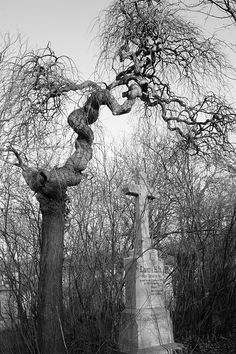 I LOVE that tree!!! old cemetery in Austria....