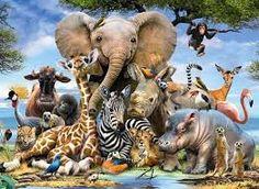 Resultado de imagem para animais