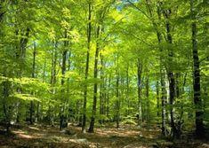 Obrázky přírody ke stažení zdarma,největší databáze na internetu