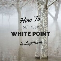 White Point in Lightroom