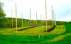 tall poles with trellises and strips of tilled soil prepared for a crop of organic hops to climb Hops Trellis, Vertical Farming, Trellis Design, Greenhouse Wedding, Growing Grapes, Home Brewing, Wind Turbine, Homesteading, Maine