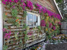AMAZING Pallet flower wall via @Carla Gentry Martens