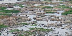 Precarização de licenciamento ambiental é grande ameaça no Brasil, avisa membro do Conama | Agência Social de Notícias