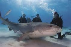Jim Abernathy has spent an incredible 35 years interacting with sharks ...
