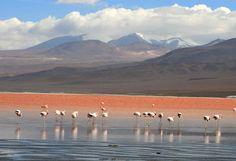 Laguna Colorada - Uyuni - Bolivia