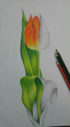 Medium: Pencil Colors.