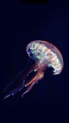 Beautiful Sea Creatures, Deep Sea Creatures, Underwater Creatures, Underwater Life, Medusa, Special Wallpaper, Flower Phone Wallpaper, Environment Design, Sea World