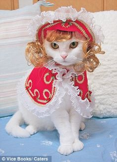 Too fuuny... its dinky's long lost cat sister....