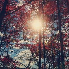 Lovely fall foliage by charlieyko // Instagram