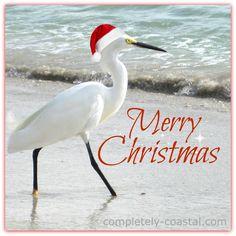 Florida Christmas Egret. Captured in Naples. Merry Christmas!