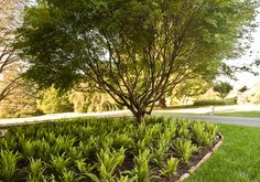 Stores Glen Mills, PA Landscaping Recent Projects Recent Projects - ideas for the fernery