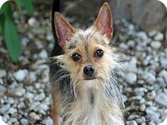 ... adoption in paducah ky see more 4 beth daily dog tag adoptable dogs